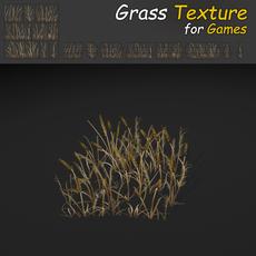 Dry Plains Grass
