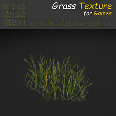 Plains Grass