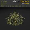 19 54 31 212 grass 15 4