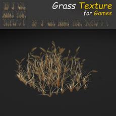 Dry WheatGrass Texture