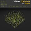 19 54 32 145 grass 12 4
