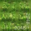 19 54 32 566 11 wheatgrass texture 4
