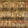 19 54 32 732 10 dry timothy grass 4
