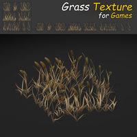 Dry Timothy Grass
