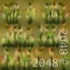 19 54 33 696 09 timothy grass 4