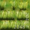 19 54 34 741 07 dense grass texture 4