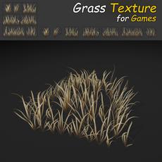 Dry Wild Grass