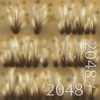 19 54 35 40 05 dry wild grass 4