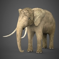 Realistic Elephant 3D Model