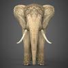 19 54 54 577 realistic elephant 02 4