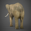 19 54 54 745 realistic elephant 04 4