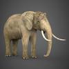 19 54 54 905 realistic elephant 06 4