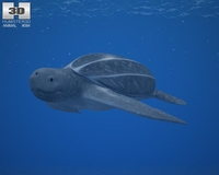 Leatherback Sea Turtle (Dermochelys Coriacea) 3D Model
