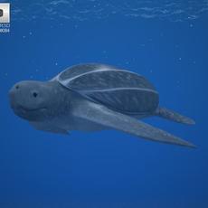 Leatherback Sea Turtle (Dermochelys Coriacea) 3D Model