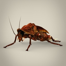 Fantasy Cockroach 3D Model