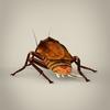 19 56 21 304 fantasy cockroach 04 4