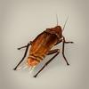 19 56 21 508 fantasy cockroach 05 4