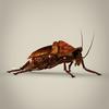 19 56 21 910 fantasy cockroach 06 4
