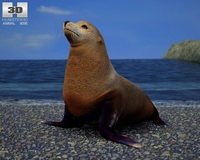 Brown Fur Seal (Arctocephalus Pusillus) 3D Model