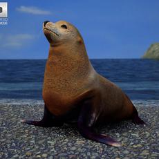 Brown Fur Seal (Arctocephalus Pusillus) 3D Model