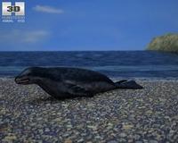Leopard Seal (Hydrurga Leptonyx) 3D Model