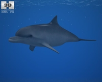 Common Bottlenose Dolphin (Tursiops Truncatus) 3D Model
