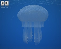 Common Jellyfish (Aurelia Aurita) 3D Model