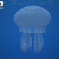 Common Jellyfish (Aurelia Aurita) 3D Model