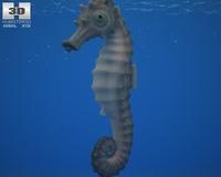 Seahorse (Hippocampus Kuda) 3D Model
