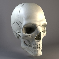 Man Skull 3D Model