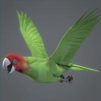 Parrotwild 06 cover
