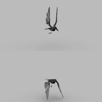 Planche posing bird cover