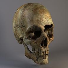 Man Skull Cracked 3D Model