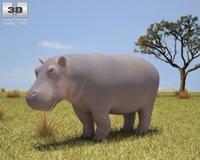 Hippopotamus (Hippopotamus Amphibius) 3D Model