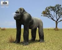 Gorilla (Troglodytes Gorilla) 3D Model