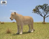 Lioness (Panthera Leo) 3D Model