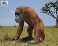 Orangutan (Pongo Borneo) 3D Model