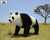 Giant Panda (Ailuropoda Melanoleuca) 3D Model