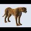 14 33 34 423 cheetah 002 4