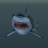 14 45 08 714 02 great white shark 4