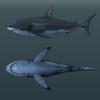 14 45 08 990 03 white shark 4