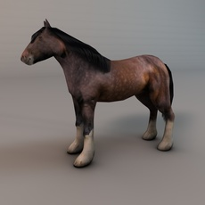 Heavy draft horse 3D Model