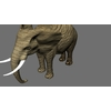14 49 07 307 elephant per 4