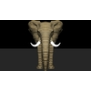 14 49 07 52 elephant front 4
