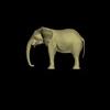 14 49 07 864 elephant side max 4