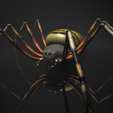 Spider Tiger Rigged 3D Model
