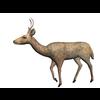 10 12 51 217 deer walk01 4