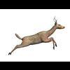 11 31 44 965 deer run02 4