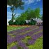 11 31 51 6 lavender 1 4