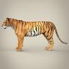 11 47 08 919 realistic bengal tiger 04 4